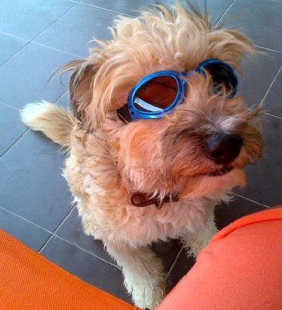 Sasha are 5 ani si s-a obisnuit cam in 2 saptamani cu ochelarii de soare care, insa, acum ii plac la nebunie